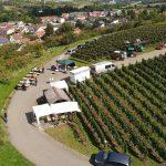 Herbst im Weinberg – Abstatt 15.09.2019